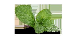 mintblad